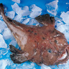 Great Quality Land Frozen Monkfish Gutted