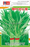 High Quality Water Spinach Swamp Cabbage Seeds Leafy Vegetable Seeds for planting-Small Leaf Water Spinach