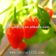 High quality natural Goji Berry/wolfberry P.E. With Polysaccharide