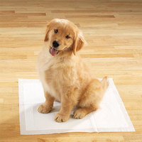 Safety scented pet pad for dog pee and training