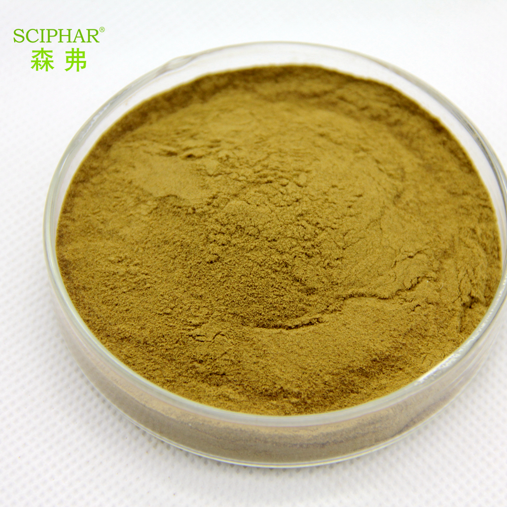 Top quality 100% natural Angelica herbal Extract /Angelica root extract powder / Radix Angelicae