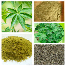 OEM service China famous green sweet tea extract