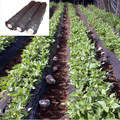 LDPE black plastic sheeting to prevent weeds