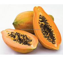 JM01 Giemda early maturity hybrid taiwan papaya seeds price