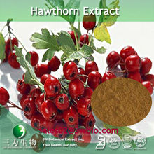 Natural Hawthorn Berry P.E. in Yellow brown powder