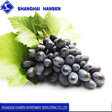 American Black Grapes import agent and customs clearance in shanghai