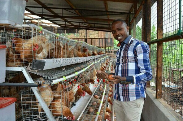 Kenya Poultry Farms with Hen House Design