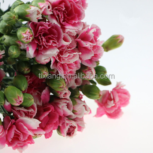 Natural decorative spray carnation heads flowers for wholesale