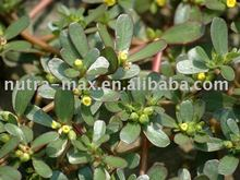 Bacopa Extract 20% Bacosides