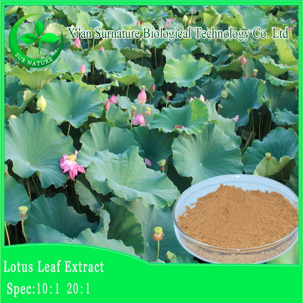 High quality lotus leaf extract powder, blue lotus extract powder