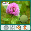 Trifolium Pratense L. powder high quality red clover extract powder