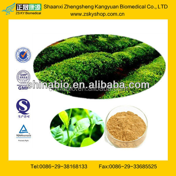 GMP Factory Supply Green Tea Extraction Polyphenols Powder 50%-98%