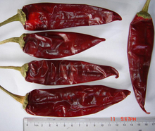 Long Hot Chili American Red Chili Jinta Chili