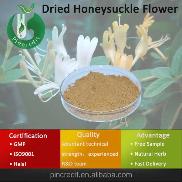 Honeysuckle Extract/Chlorogenic Acid/Dried Honeysuckle Flower