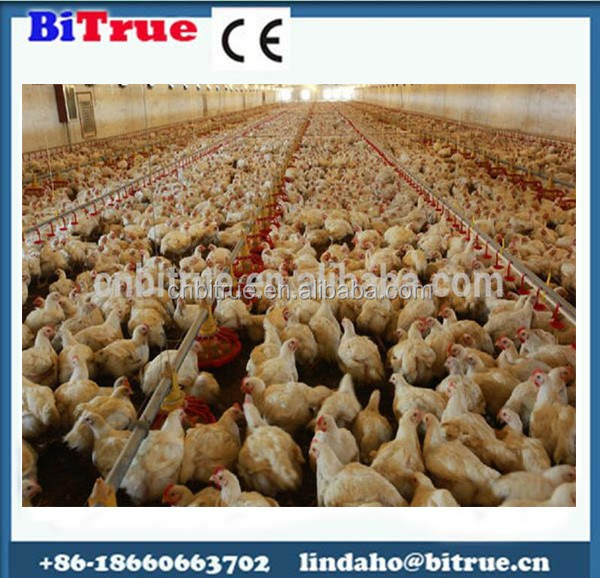Poultry farming equipment , turnkey chicken farms design and construction