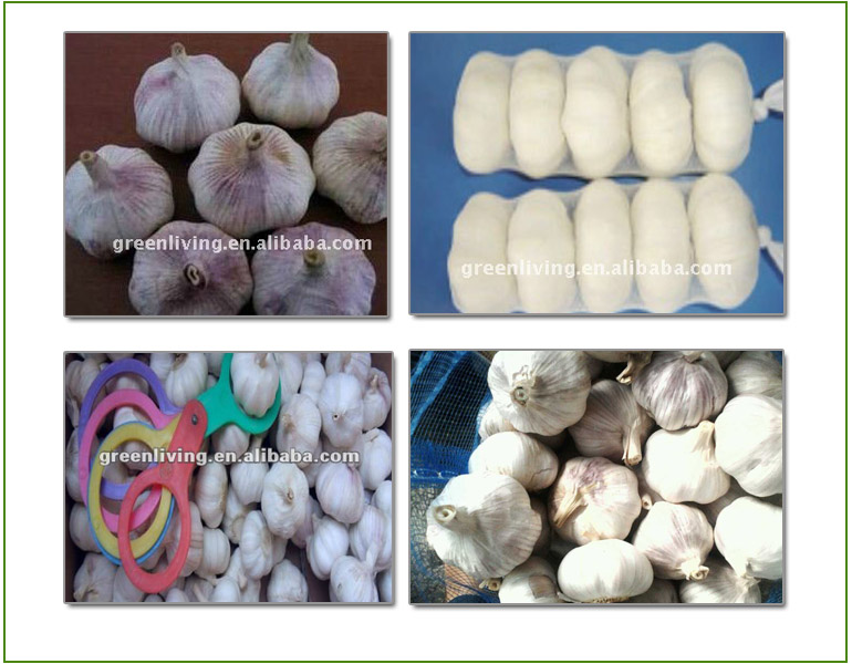 Chinese Garlic For Export