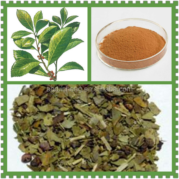 100% Natural Yerba Mate Extract/Yerba Mate Extract Powder/Yerba Mate Wholesale