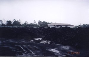 Indonesian Steam Coal 5800 GCV