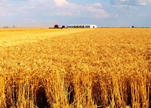 U.S. wheat prices cheap farm of origin direct supply