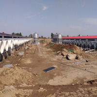 China modern auto pig farm project with whole pig farm equipment