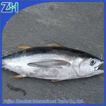 Frozen tuna fish price yellowfin buy tuna frozen tuna for Tuna fish price