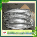 frozen king fish / spanish mackerel