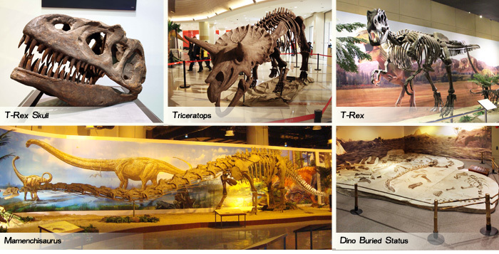 T-Rex Skeleton Dinosaur Fossil Specimens For Sale