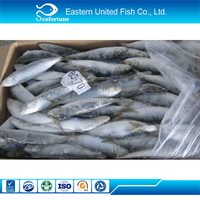 Seafood Export Frozen Pakistan Sardine Fish