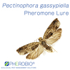 Pheromone Lure for Pectinophora gassypiella, Pheromone Attractant