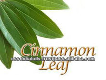 BEST SUPPLIER OF CINNAMON LEAF ESSENTIAL OIL