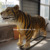 amusement park animatronic tiger statue