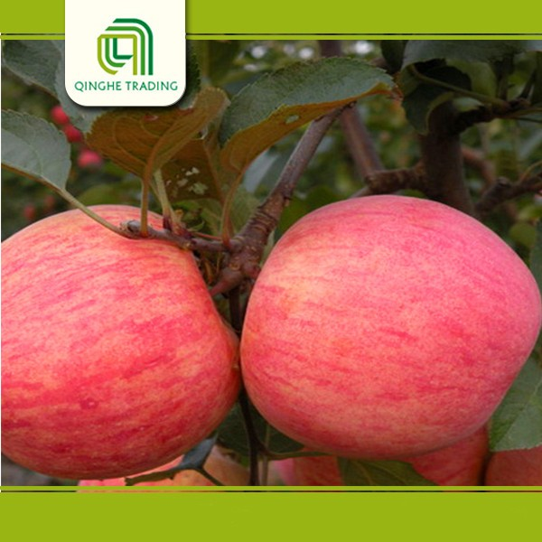 wholesale local fruits and vegetables fresh fuji apple with high quality