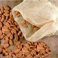 Cocoa Beans 1st and 2nd grade from Ivory Coast