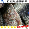 New season Whole Round Frozen Tilapia for African Market