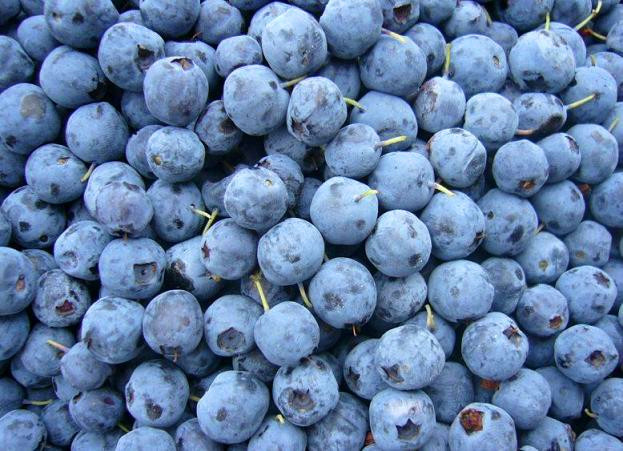 IQF frozen blueberry prices for sale good quality frozen blueberry