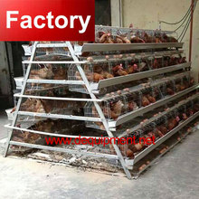 Factory A type frame poultry farm 3 tier 120 capacity chicken layer cage for poultry in dubai