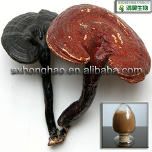 Herb Health Food 20% polysaccharides ganoderma extract in stock