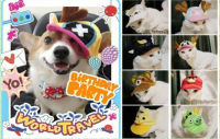 Lovely Dog Hat Dog Helmet Pet Cap Pet Hat and Helmet for dog