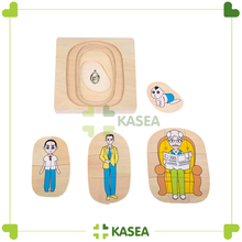Montessori Educational Wooden Toys - Development of Man