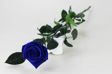 Preserved Real Flowers Natural Fresh Rose With Stem