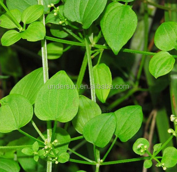 Factory Supply TOP Quality rubia cordifolia extract