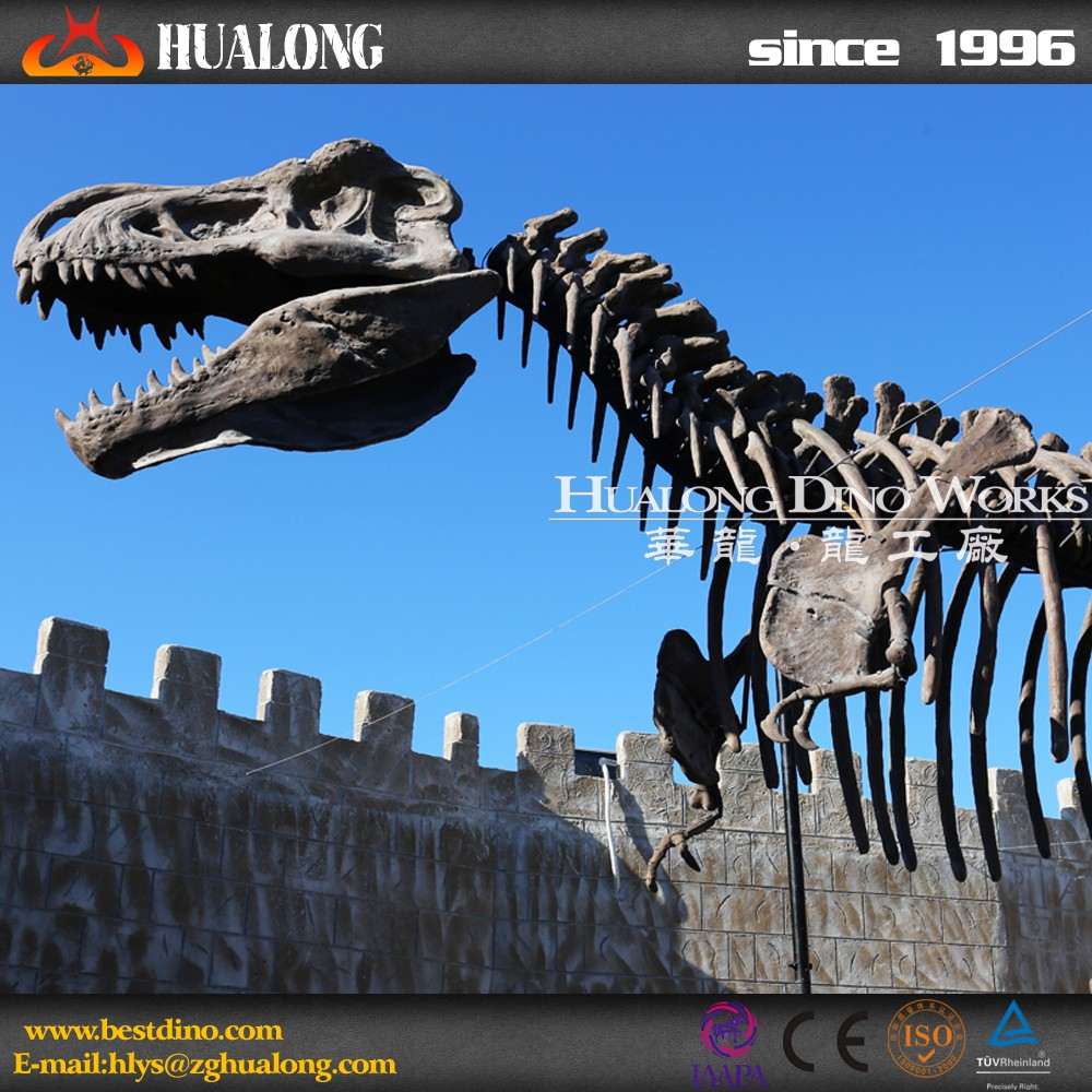 Museum High Quality Fiberglass Dinosaur Skeleton For Sale