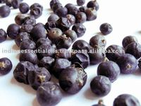 Juniper Berry Oil extracted from Dried ripe fruits by Steam Distillation