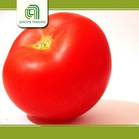 Brand new fresh tomatoes with CE certificate