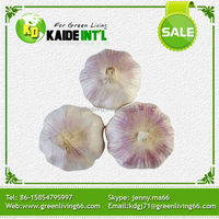China fresh garlic for Bangladesh market