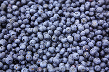 Chinese best quality bulk frozen blueberry