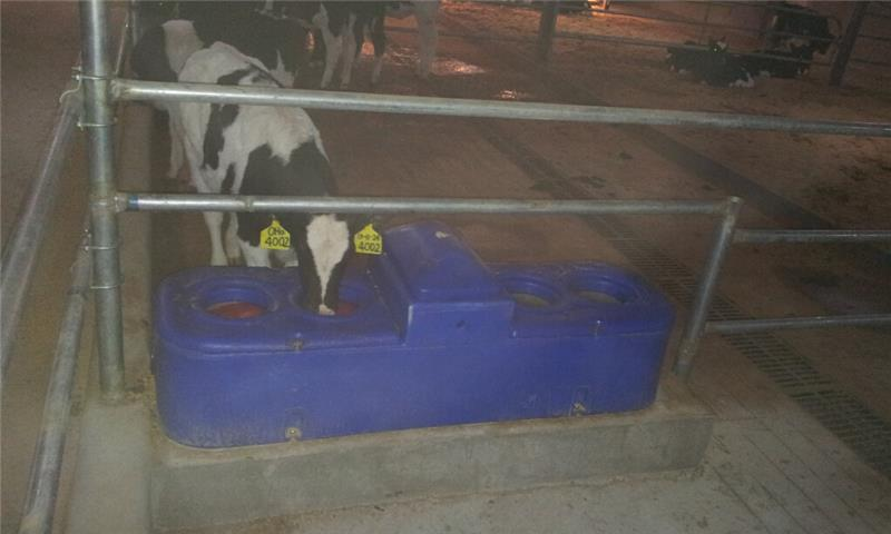 lamb livestock sheep water troughs for sale for dairy farm