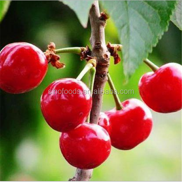 Zhen Ye Ying Tao Food Additive Health Care Acerola Cherry Extract Wholesale