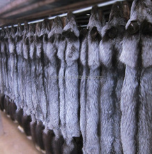 natural silver fox skin pelt