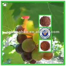 Polyphenols 40%&60%&80% Grape Seed Extract